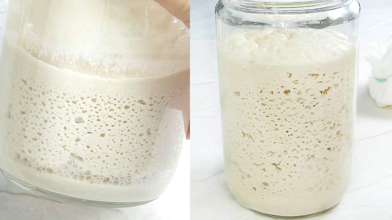 Bubbling and active gluten free sourdough starter